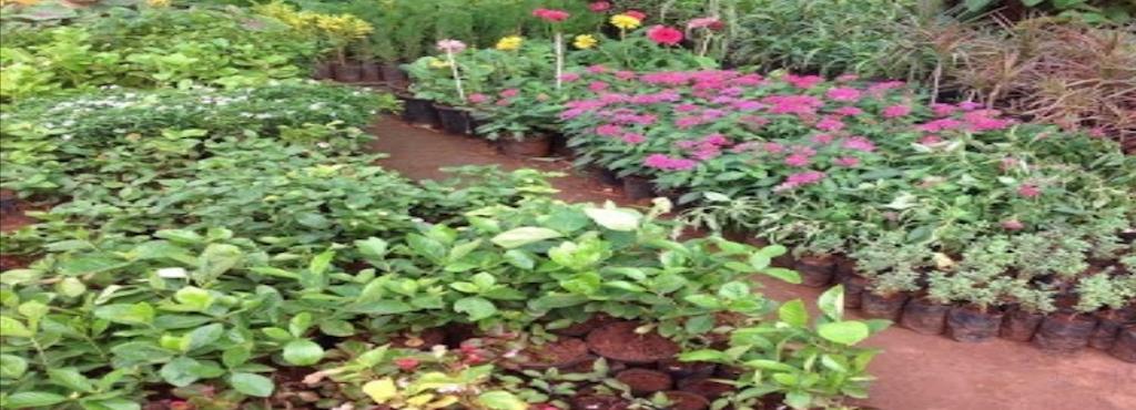 Jeevan Landscape Gardening Dilsukhnagar Plant Nurseries