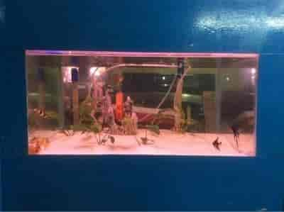 table aquarium india - best aquarium fish tank 2017