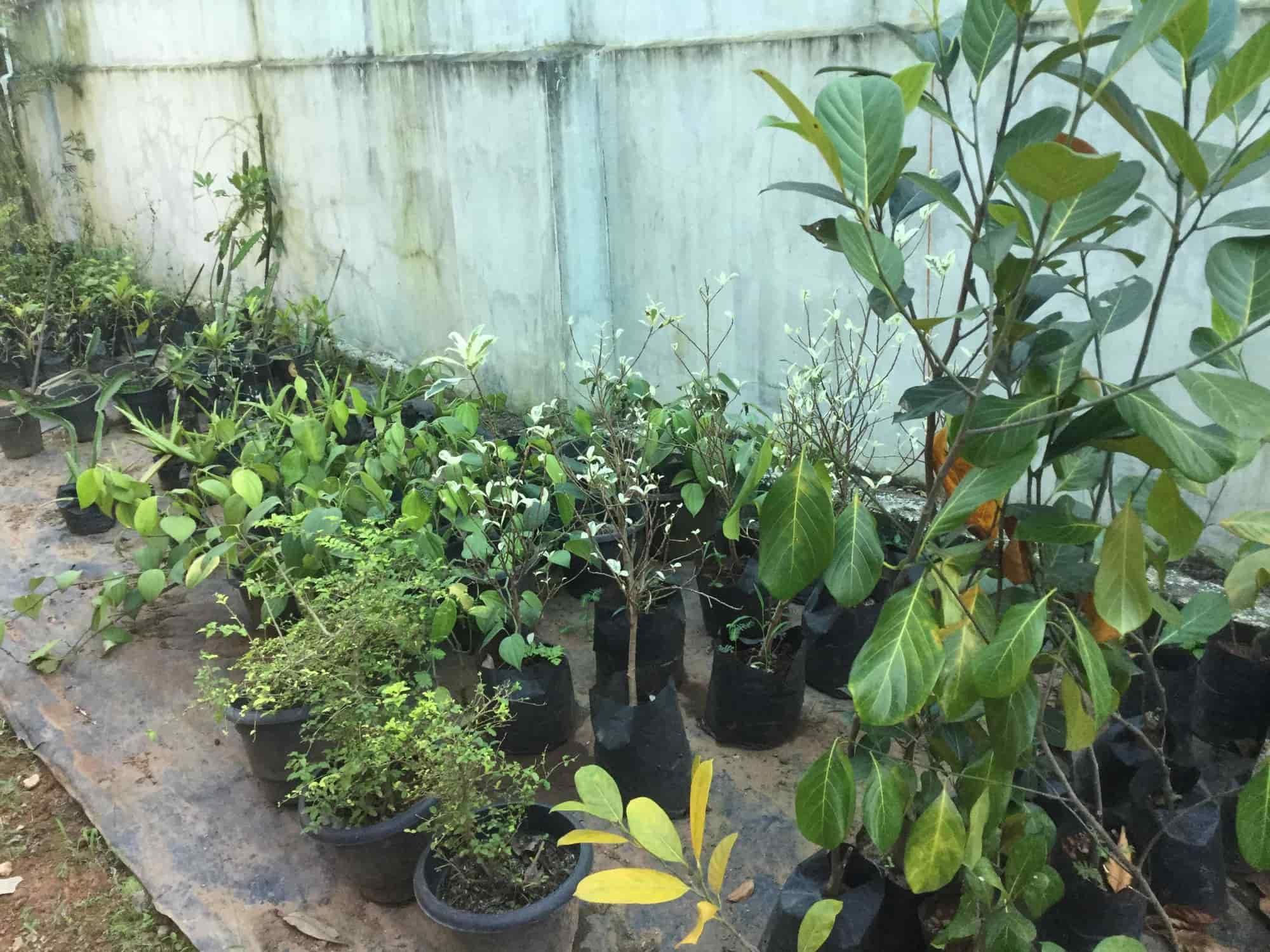 Greenscape Agriculture Gardens Photos, Perunna, Kottayam   Plant Nurseries  ...