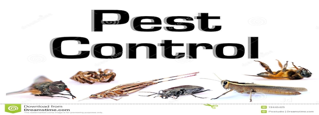 Regal Pest Management Wagholi Residential Control Services In Pune Justdial