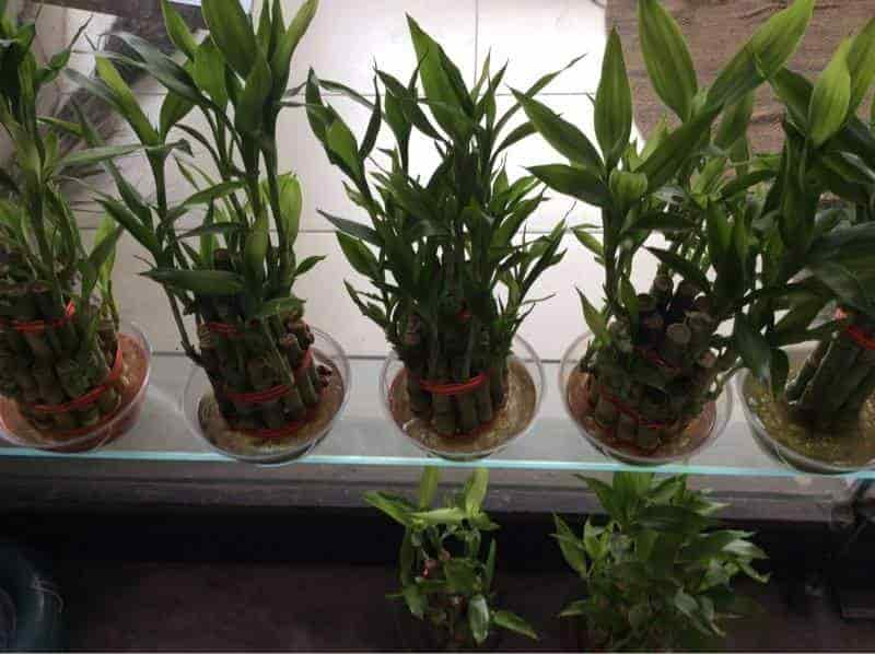stylist lily house plant. Plants Rose N Lily The Flower House Photos Mira Road Mumbai Florists  Pictures Stylist Plant Home Design Plan Best 100 Image Collections nickbarron